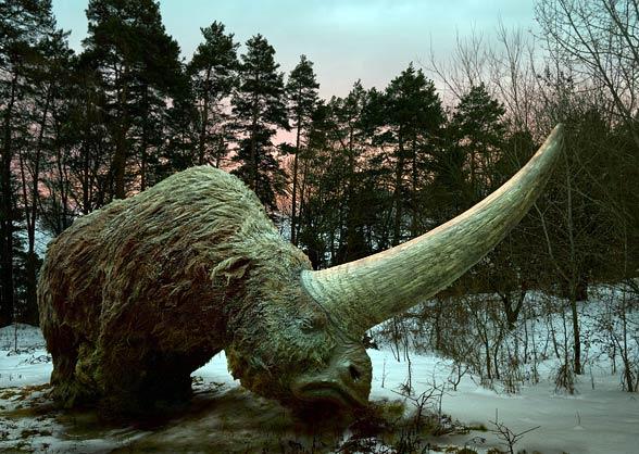Elasmoterium (Elasmotherium).