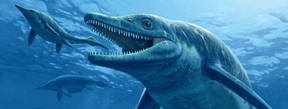 An analysis of the sea animal shark