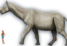 Photo of Paraceratherium, Indrikoterium Baluchitherium
