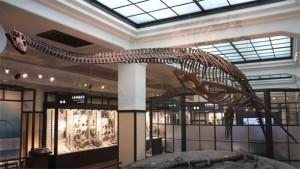 Plezjozaury (Plesiosauria)