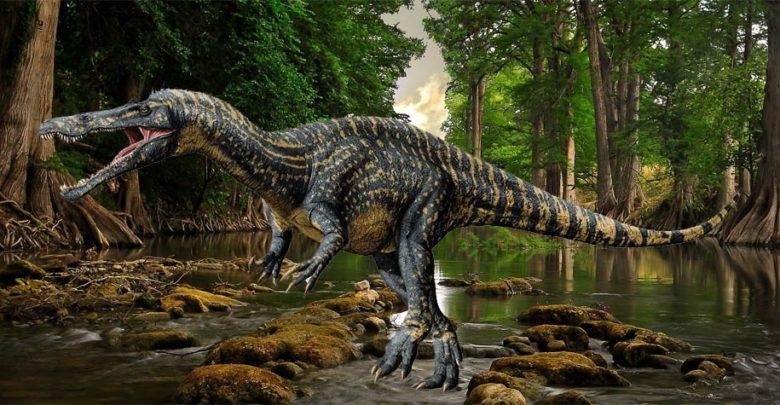 Photo of Suchomim (Suchomimus)