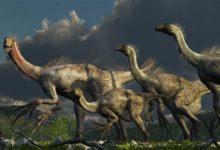 Photo of Terizinozaur (Therizinosaurus cheloniformis).