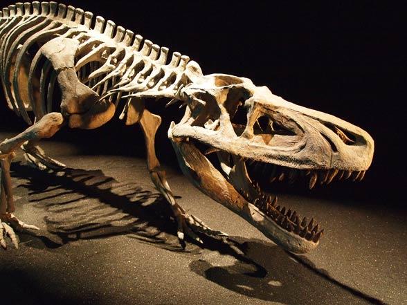 Photo of Zaurozuch (Saurosuchus)