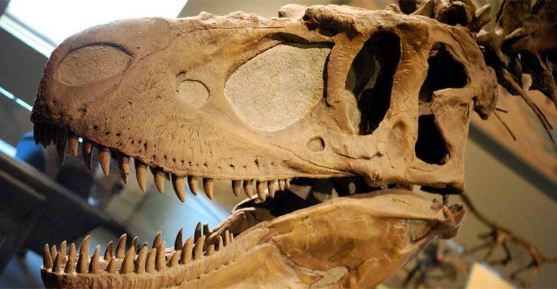 Photo of Daspletozaur (Daspletosaurus)