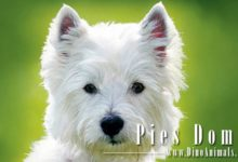 Photo of Pies domowy (Canis lupus familiaris)