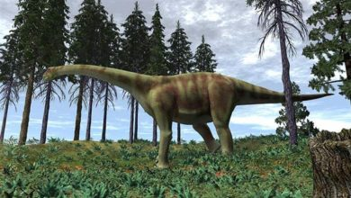 Photo of Turiazaur (Turiasaurus riodevensis).