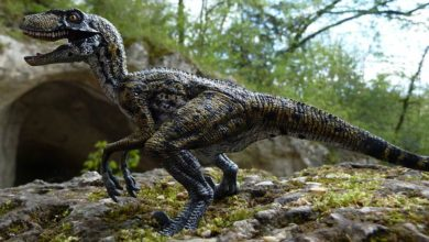 Photo of Utahraptor (Utahraptor ostrommaysi)
