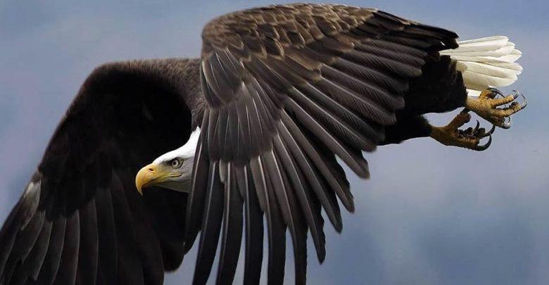 Photo of Największe orły i bieliki – Top 10