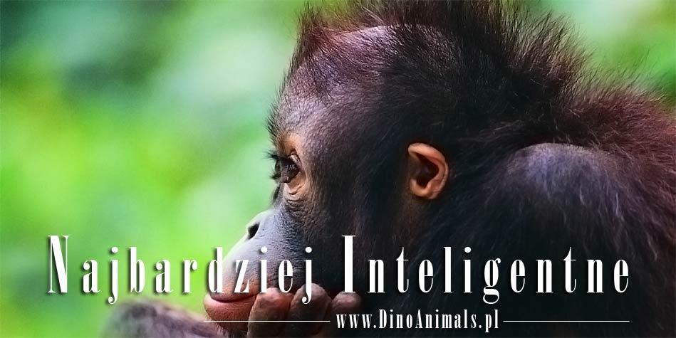 Photo of Najbardziej inteligentne zwierzęta – TOP 10