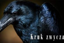 Photo of Kruk zwyczajny (Corvus corax)