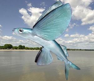 Ryby latające, ptaszory, ptaszorowate (Exocoetidae).