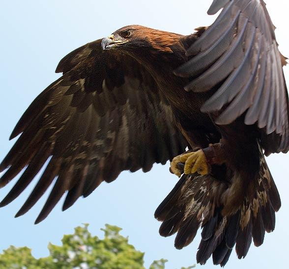 Najszybsze Ptaki świata Top 10 Dinoanimalspl