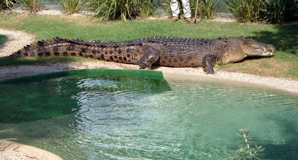 http://dinoanimals.pl/wp-content/uploads/2013/11/Krokodyl-rozancowy17.jpg