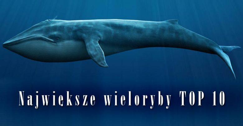 Photo of Największe i najcięższe wieloryby – TOP 10