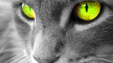 Photo of Kot domowy (Felis catus)