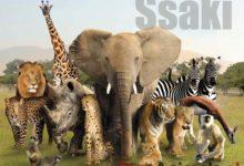 Photo of Królestwo zwierząt – Ssaki