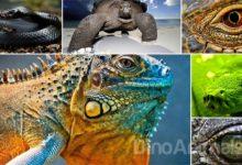 Photo of Królestwo zwierząt – Gady