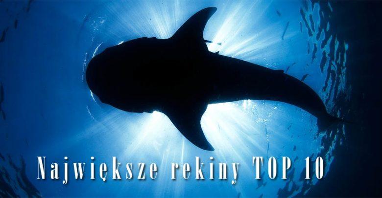 Photo of Największe rekiny – TOP 10