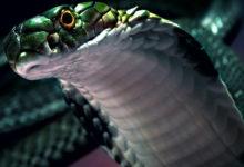 Photo of Najbardziej jadowite węże świata – Top 10 cz. II