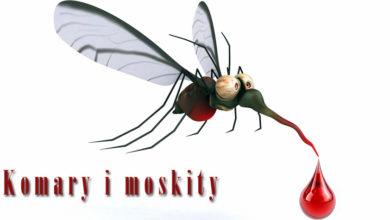 Photo of Komary i moskity