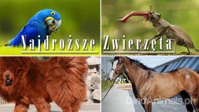 Photo of Najdroższe zwierzęta świata – TOP 10