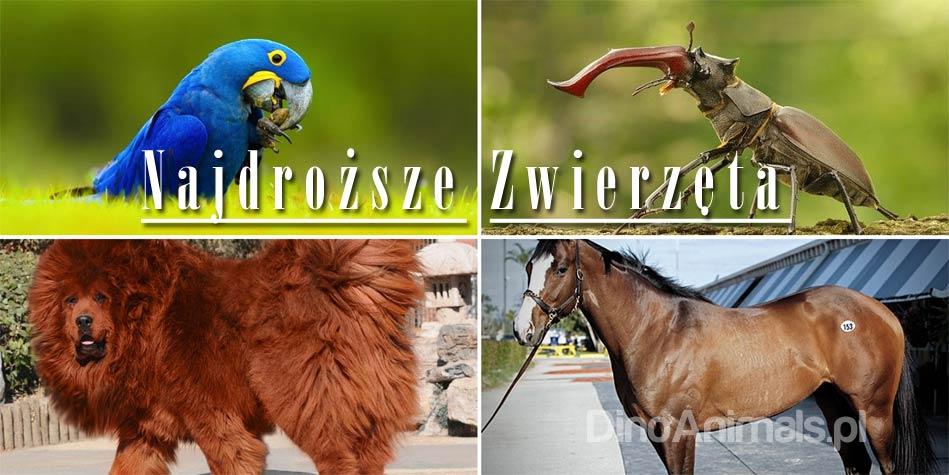 Góra Najdroższe zwierzęta świata - TOP 10 | DinoAnimals.pl KR07