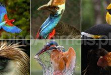 Photo of Królestwo zwierząt – Ptaki