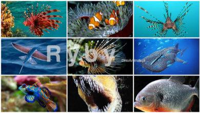 Photo of Królestwo zwierząt – Ryby