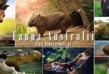 Photo of Fauna Australii / Zwierzęta Australii