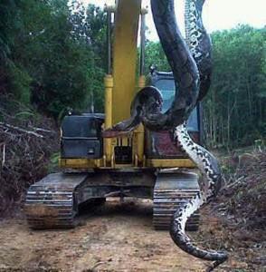 Najdłuższy wąż