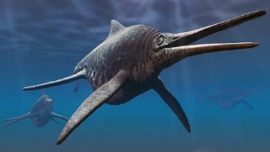 Photo of Szonizaur (Shonisaurus)