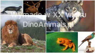 Photo of Zwierzęta wymarłe w XX wieku