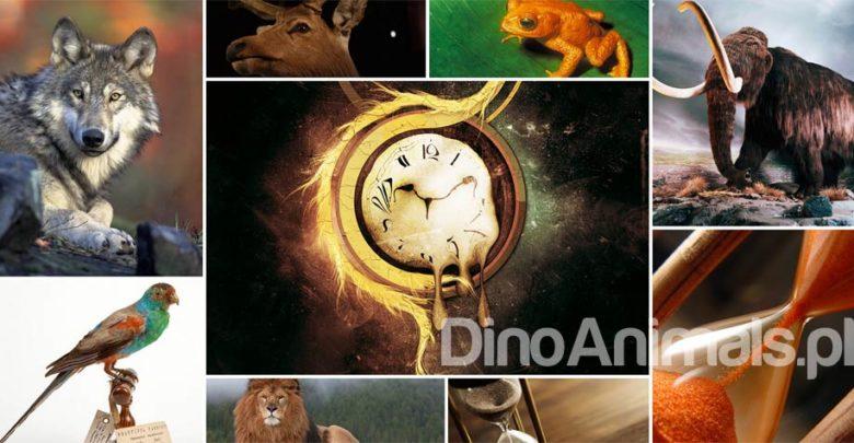 Photo of Historia wymierania gatunków zwierząt i roślin