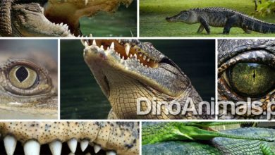 Photo of Aligator, krokodyl, kajman i gawial