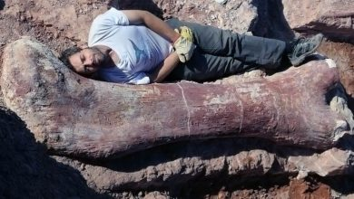 Photo of Odkryto największego dinozaura w historii?