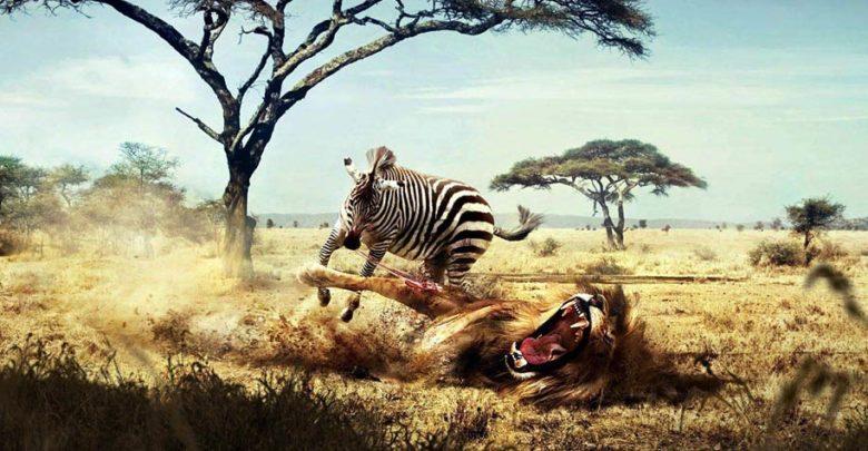 Photo of Hipotetyczne pojedynki zwierząt