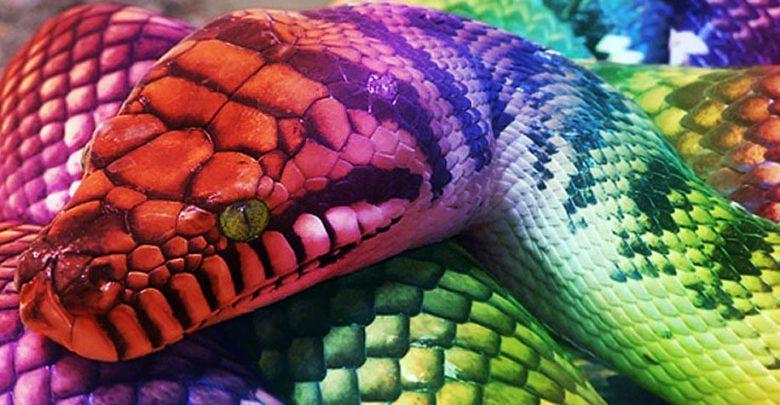 Photo of Aborygeński Tęczowy Wąż