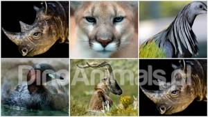 Zwierzęta wymarłe w XXI wieku.