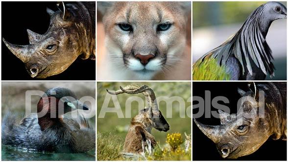 Photo of Zwierzęta wymarłe w XXI wieku