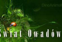 Photo of Królestwo zwierząt – Owady, insekty (Insecta)