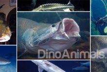 Photo of Największe ryby słodkowodne – TOP 10