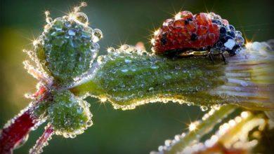 Photo of Biedronki, biedronkowate (Coccinellidae).