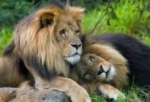 Photo of Homoseksualizm wśród zwierząt