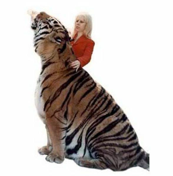 Jaipur tygrys