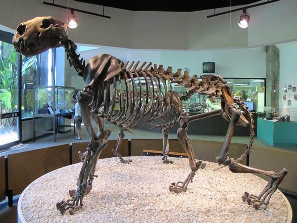 Lew amerykański (Panthera leo atrox lub Panthera atrox).