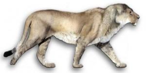 Lew amerykański (Panthera leo atrox lub Panthera atrox)