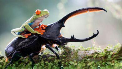 Photo of Chrząszcze – najliczniejsze owady na świecie