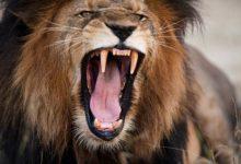 Photo of Najsilniejsze szczęki wśród ssaków – Top 10