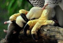 Photo of Największe pazury i szpony zwierząt – TOP10