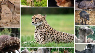 Photo of Najbardziej zagrożone gatunki ssaków – Top 10